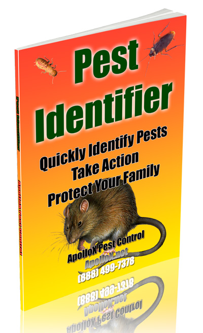 cover-pest-identifier-apollox-pest-control-greenwich-ct-400px
