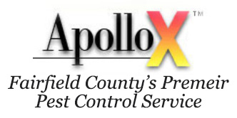 Prevent Bed Bugs from Coming Home: Travel Tips - ApolloXApolloX