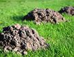 mole-damage-apollox-pest-control-greenwich-ct