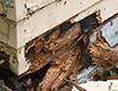 termites-damage-apollox-pest-control-greenwich-ct