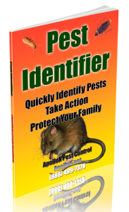 pest-identifier-apollox-pest-control-greenwich-ct
