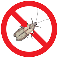 Indian Meal Moth Pest Control