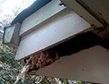 roof-rat-damage-apollox-pest-control-greenwich-ct