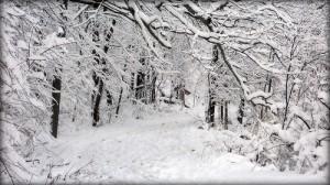mid-winter-pest-control-treatments-001