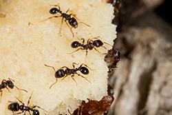 Food Destroying Pests