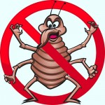 Pest Control Exterminator Prevent Bed Bugs