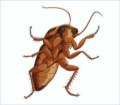 Cockroach Value: Medicine and Conservation