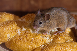 Winter Rodent Pest Control Inspection Checklist