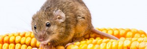 Food Destroying Pests
