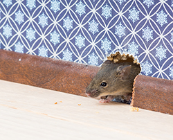 Why Winter Pest Control