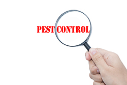 pest-control-018