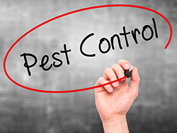 Mid-Winter Pest Control Treatments