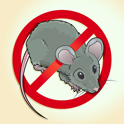 Rat Infestation Signs, Solutions