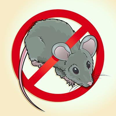 Rat Infestation Signs, Solutions