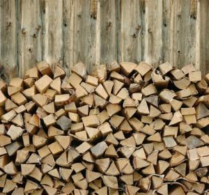 Termites in Northeastern Firewood Piles