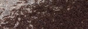 safe ant repellants