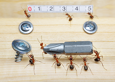 Carpenter Ants Emerging: Spring is Here!