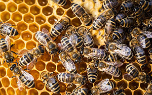 Wasp Extermination Timing
