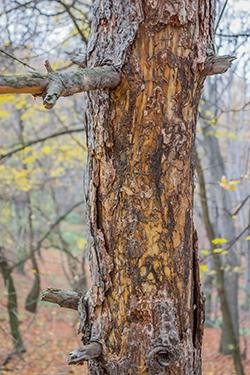 Termites Create Fertile Soil
