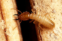 Termite Types - Not All Termites Are the Same