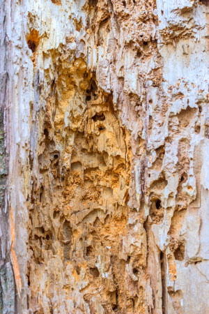 Locate Termite Colony - Track termite activity back to their home.