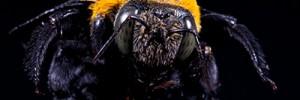 Carpenter Bee Prevention