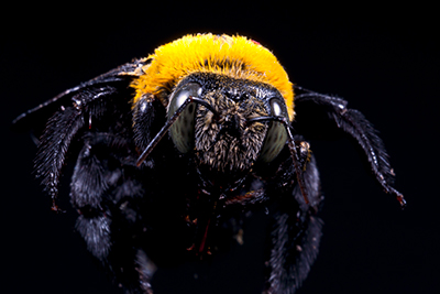 Carpenter Bee Prevention - Head off potential damage to your home.