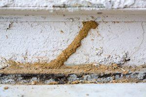 Termite Prevention Basics - ApolloX Pest Control - 888-499-7378