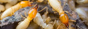 Termite Prevention Basics - ApolloX Pest Control - 888-499-7378