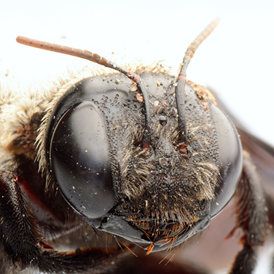 How to Get Rid of Bees - When They're Not Beneficial
