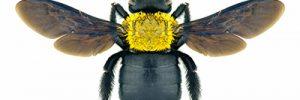 Carpenter Bee Prevention, Treatment
