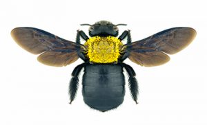 Carpenter Bee Prevention, Treatment